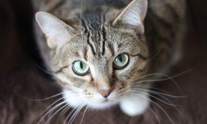 Hoe vaak moet ik mijn kat ontwormen?